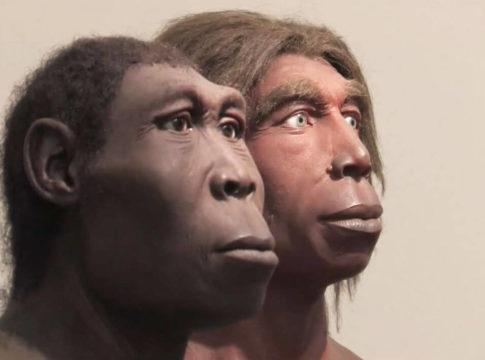 neandertalci Adam potomci