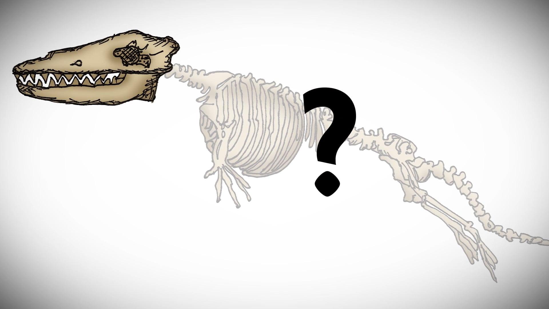 evolucija fosili kitovi