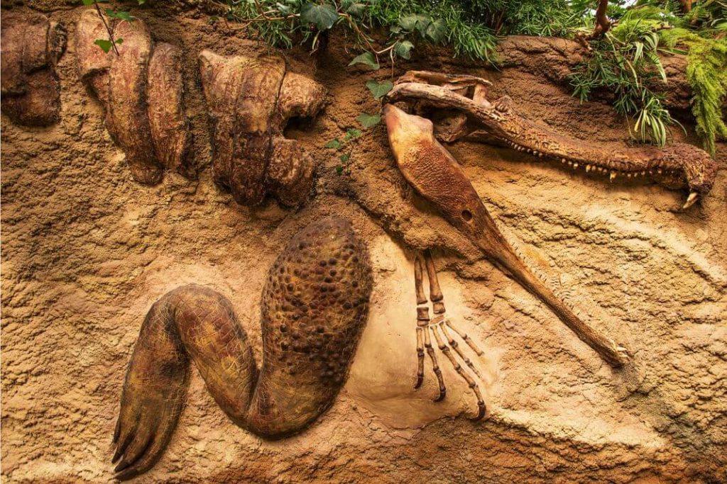 dinosaurusi fosil