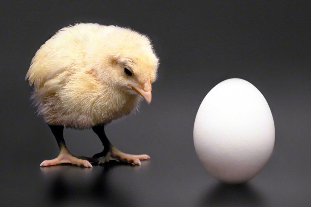 kokoš ili jaje