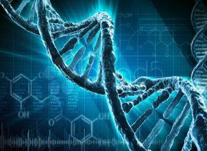 genetika entropija
