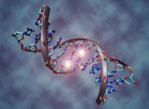 DNK dokaz zajedničkog pretka