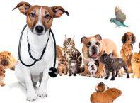 kućni ljubimci životinje