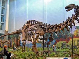 Behemot sauropod dinosaur