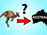 klokani Australija fosili