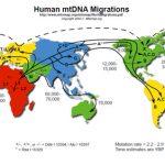 DNK migracija