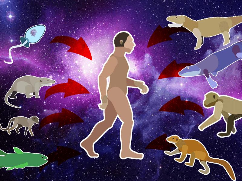 evolucionistička bajka evolucija