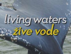 žive vode evolucija